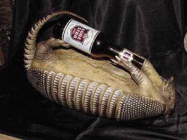 Armadillo drinking beer.