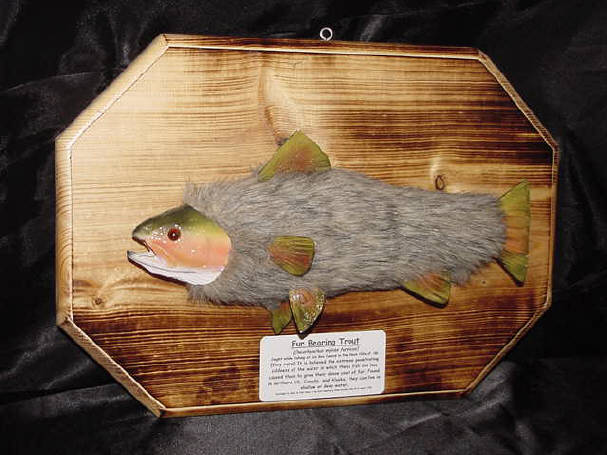 The fabulous fur bearing trout.  Click to order.